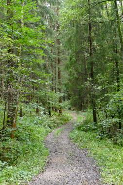 Schöne ehemalige Wanderwege im Bayerischen Wald.