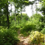 Wanderwege im Felswandergebiet im Nationalpark Bayerischer Wald