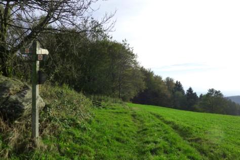 Ein markierter Wanderweg in der Region Sonnenwald im Bayerischen Wald  bringt uns hinab.