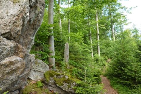 Schöne Wanderwege im Nationalpark Bayerischer Wald.