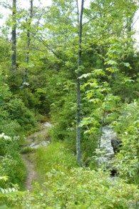 Ein Pfad am Steinbach.