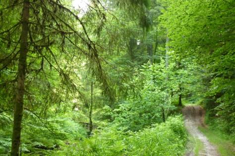 An der Kleinen Ohe zwischen Eging und Fürstenstein.
