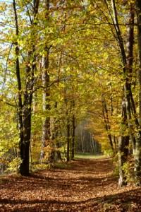 Herbststimmung bei Entschenreuth.