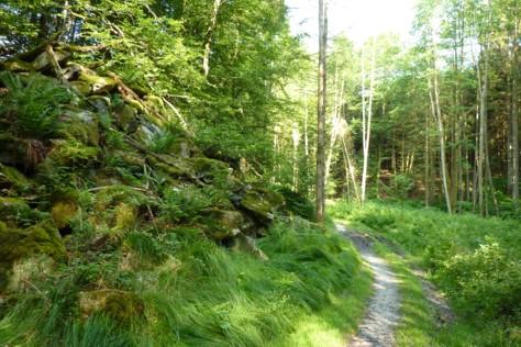 Der Wanderweg führt am aufgelassenen Steinbruch vorbei.