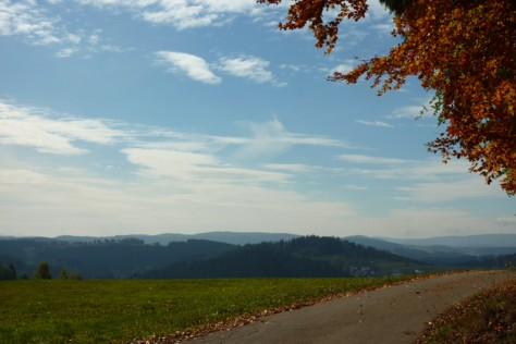 Hinter der Wiese liegt Außenried. Dort gibt es einen Haltepunkt der Waldbahn.