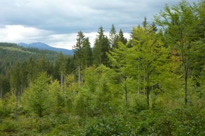 Blick auf den Großen Arber im Bayerischen Wald bei Frauenau