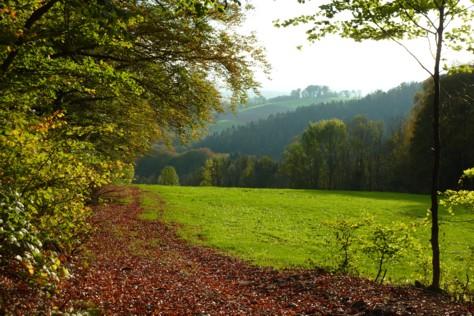 Ein wunder-, wunderschöner Waldrand!