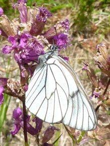 Schmetterling im Nationalpark Bayerischer Wald.