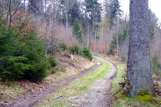 Ein Waldweg im Lallinger Winkel.