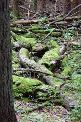 Wanderung zu Totholz.