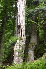 Im Biotopholz tobt das Leben.