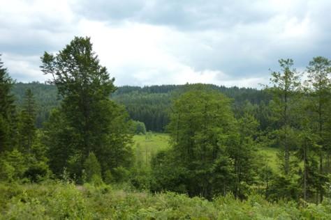 Blick auf Stockauswiesen N