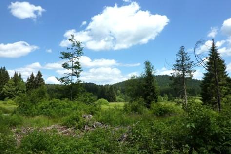 Schöne Natur erwartet uns bei dieser Wanderung im Bayerischen Wald.