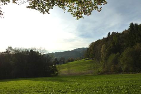 Blick vom Waldrand zum Gehöft bei Prünst