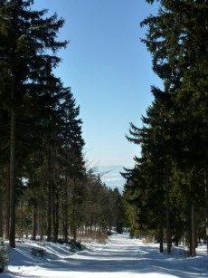 Auf dem Rodelhang bei Bodenmais im Winter.