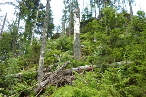 Die Große Kanzel im Felswandergebiet im Nationalpark.