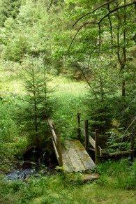 Beim Wandern im Bayerischen Wald geht es auch über kleine Brücken.