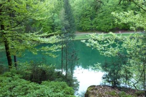 Buchwiesweiher bei Thurmansbang - ein Waldweiher mit Bademöglichkeit.