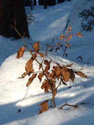 Ein wenig Farbe im Winter.