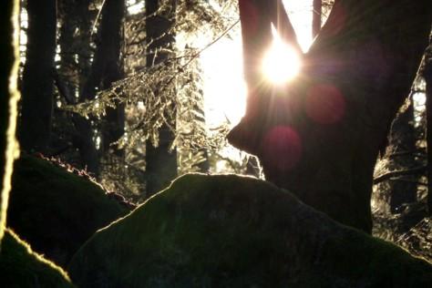 Die Sonne scheint durch ein Loch im Baum.