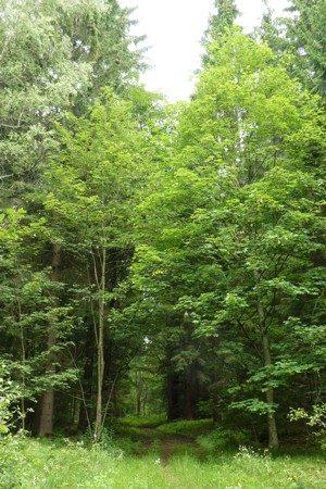 Wandern im Wald ist angesagt.