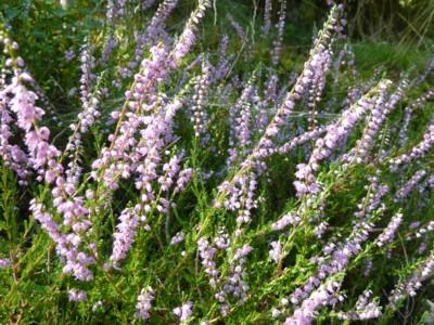 Blumen am Waldrand im Bayerischen Wald.