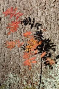 Herbst-Impressionen.