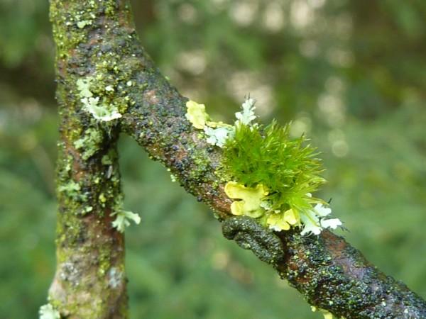 Grüne Farbenvielfalt