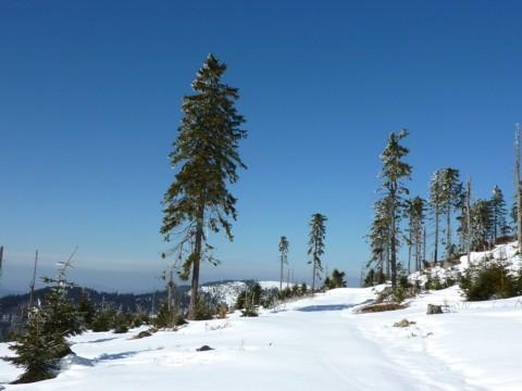 Fast unberührter Schnee am Fuße des Kleinen Arbers.