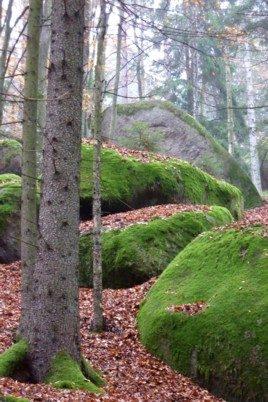 Felsen auf dem schönen Wanderweg zum Wackelstein bei Schönberg.