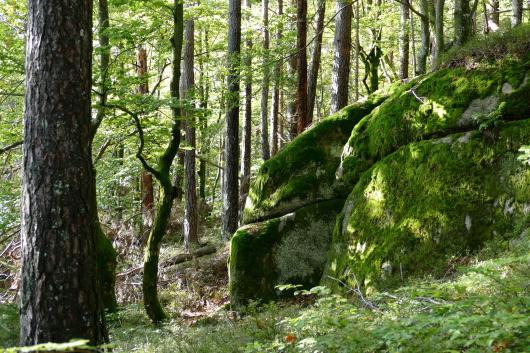 Felsen entlang eines schönen Pfades.