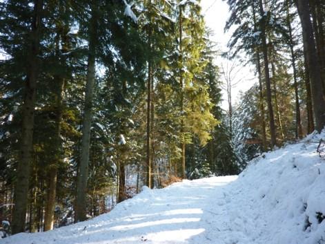 Der Anfang vom Forstweg bei Platten.