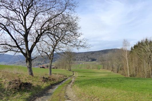 Wanderung zwischen Hunding und Kieflitz im Bayerischen Wald.