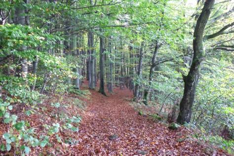 Schöne Wanderwege im Bayerischen Wald.