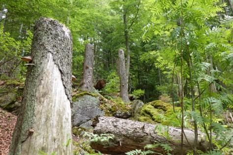 Im Felswandergebiet