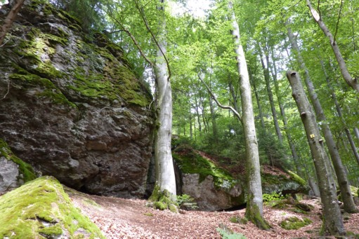 Eine schöne Wanderung im Bayerischen Wald.
