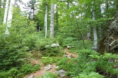 Schöne Wege und Pfade führen durch das Felswandergebiet im Nationalpark Bayerischer Wald.
