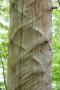 Totholzbäume im Nationalpark entdeckt man beim Wandern viele.