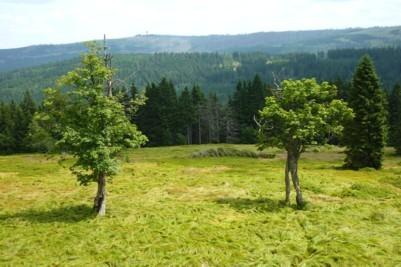 Wandern im Nationalpark Bayerischer Wald auf den Schachten.