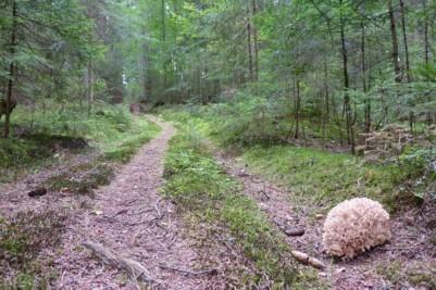 Pilze finden beim wandern im Bayerischen Wald.