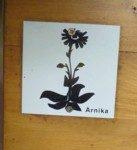 Wandermarkierung Arnika im Nationalpark.