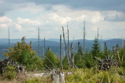 Im Nationalpark Bayerischer Wald.