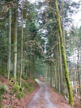 Rückweg von Ranfelsmühle mit dem blauen Goldsteig-Wanderzeichen im Bayerischen Wald.