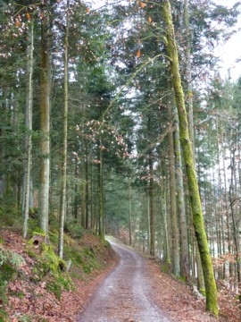 Rückweg von Ranfelsmühle mit dem blauen Goldsteig.