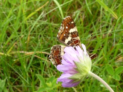 Ein Schmetterling spielt verstecken.