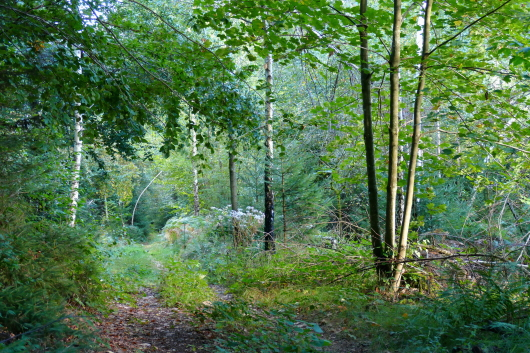 Schöne Wege rund um den Ebenreuther See.