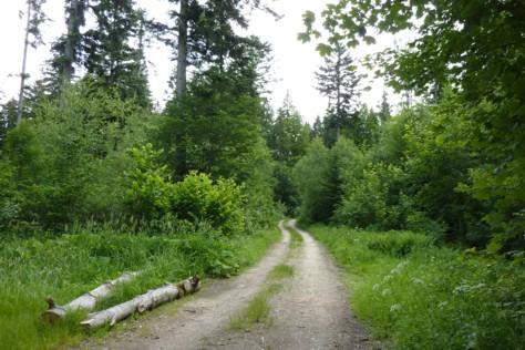 Spazierweg oberhalb von Rabenstein.