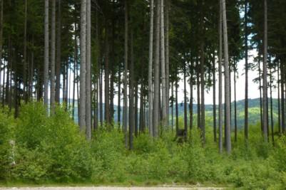 Steckerlwald mit Nachwuchs.
