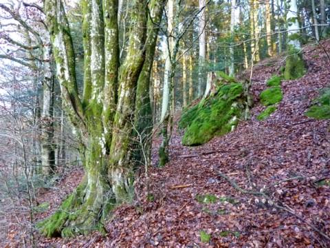 Die Hänge im Tal der Großen Ohe bei Ranfels sind steil.