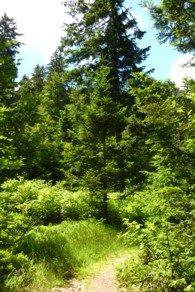 Idyllische Wanderwege im Nationalpark Bayerischer Wald.